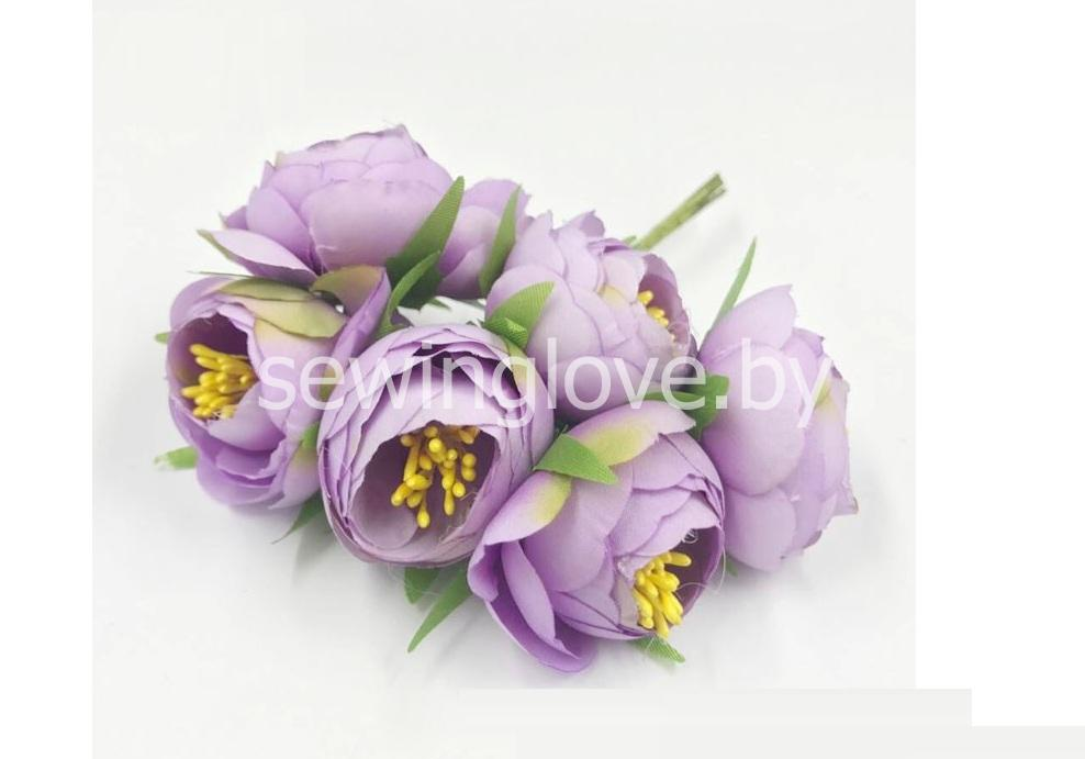 Цветы пион в бутоне сиреневый