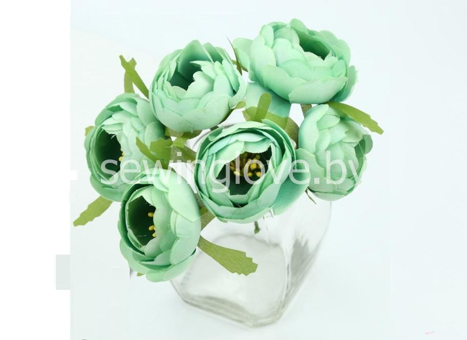 Цветы пион в бутоне мятный
